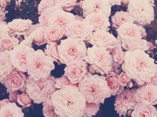 14 best ❁ flowers ❁ images on pinterest | girl things, just
