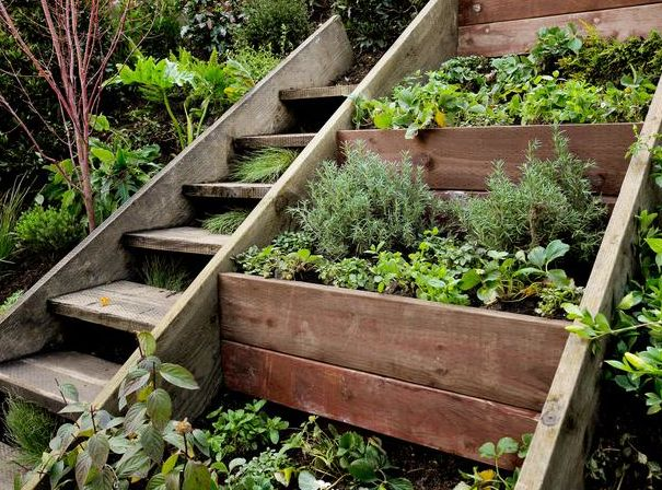 Retaining wall herb garden on a steep slope next to a stair case. We need something like this in our back yard.