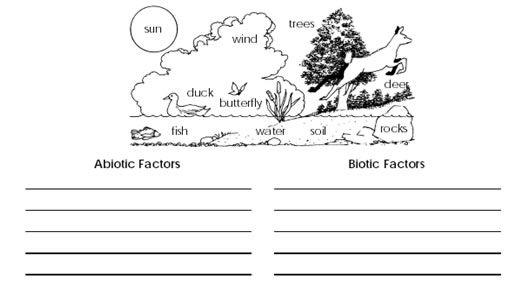 Ecology Biotic And Abiotic Factors Worksheet