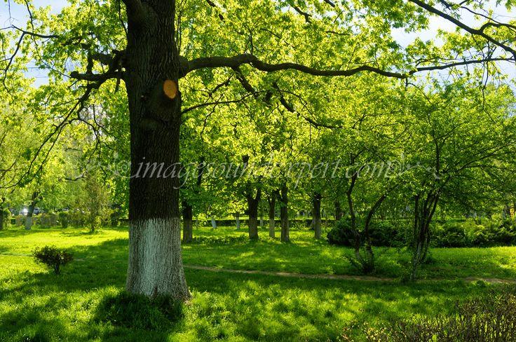 fond printemps feux verts ombre