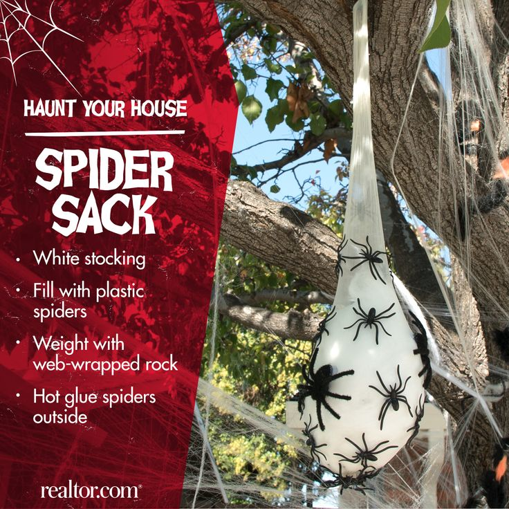 Nothing scarier than a sack of spiders