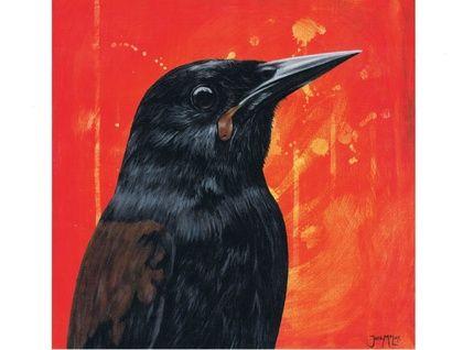 New Zealand Saddleback Bird