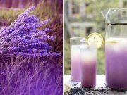 Zázračné vlastnosti levandule a recept na levanduľovú limonádu