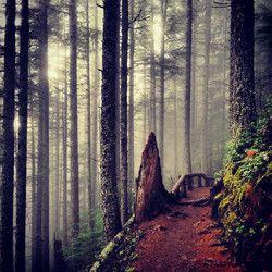 Mt. Si Trail - North Bend, WA USA