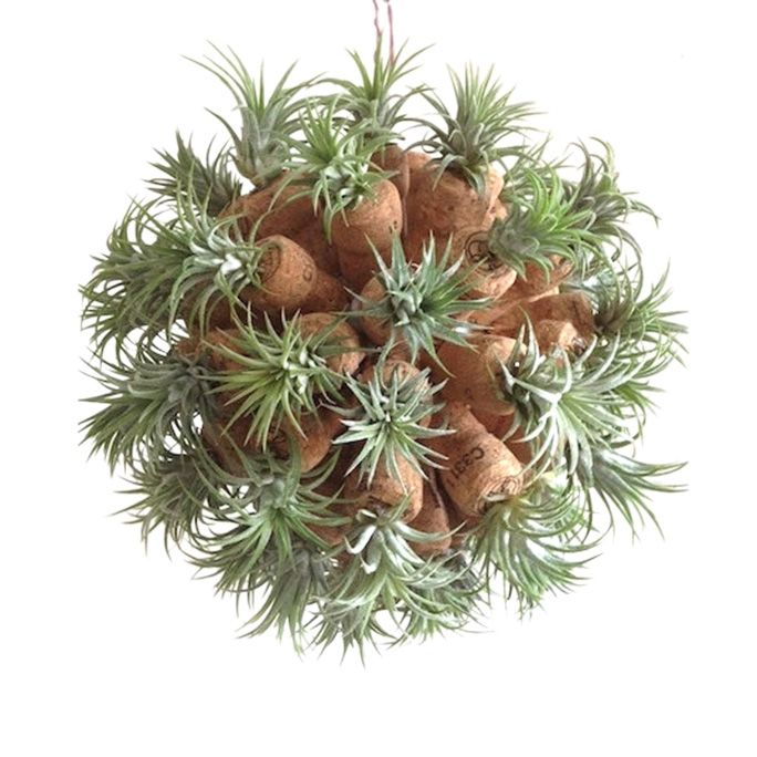 This heavenly body joins champagne corks and air plant sproutlings to create a unique sphere of otherworldly greenery. Change up the atmosphere of a room by hanging this sculpture in place of a potted houseplant.