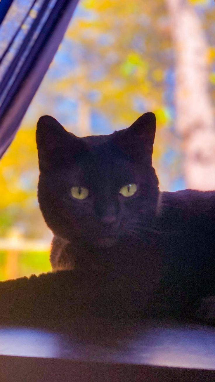 Iphone Black Cat Wallpaper In 2020 Cat Wallpaper Cute Black Cats Black Cat Aesthetic