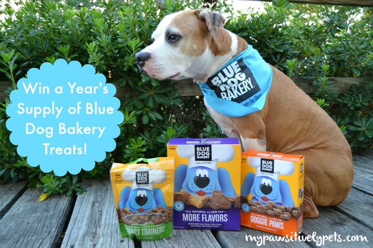 Shiner Tries Blue | Blue Dog Bakery Healthy Treats for Dogs | Pawsitively Pets