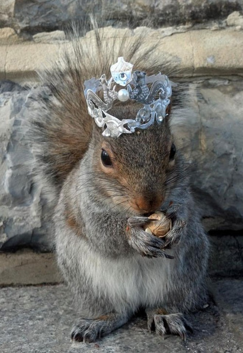 Sneezy the Squirrel with crown