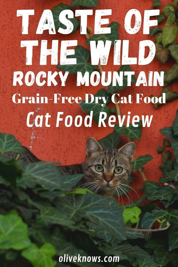 Taste Of The Wild Rocky Mountain Grain Free Dry Cat Food Review Oliveknows Dry Cat Food Cat Food Reviews Free Cat Food