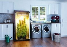 Buy Marijuana Grow Box indiegogo... concise how-to in story form http://www.howtogrowweed420.com/