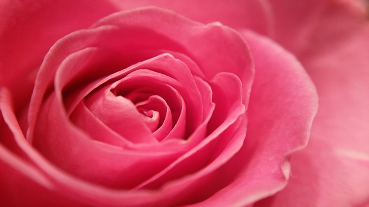 Red rose close up  http://5kwallpapers.com/wall/red-rose-close-up  #red #rose #flower #nature #love