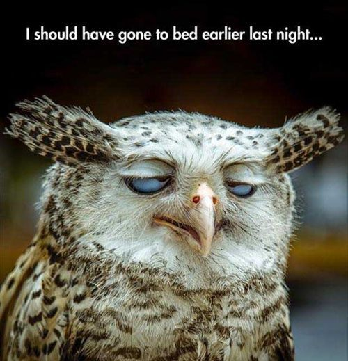 Is it just me or does this owl look like radagast the brown when he smokes from gandalfs pipe?