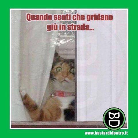 La curiosità uccise il #gatto #bastardidentro #tagga i tuoi amici e #condividi le risate! www.bastardidentro.it