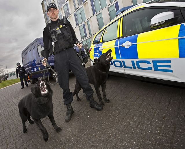 GMP is stepping up patrols to prevent cash-in-transit robberies in the run-up to Christmas and for the first time Police Dog Luther will be part of the team. Luther, 11 months old, joined GMP when he was eight weeks old and will be joining the patrols with his handler PC Phil Monaghan and his other police dog Trouble, aged 7 and a half. Both are black German Shepherds. www.gmp.police.uk