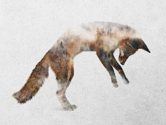 Jumping Fox Art Print by Andreas Lie | Society6
