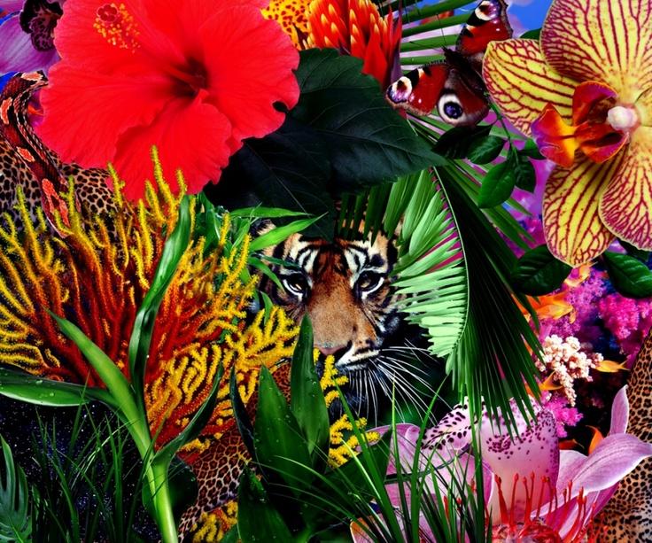 Jungle Love | Mat Maitland Images