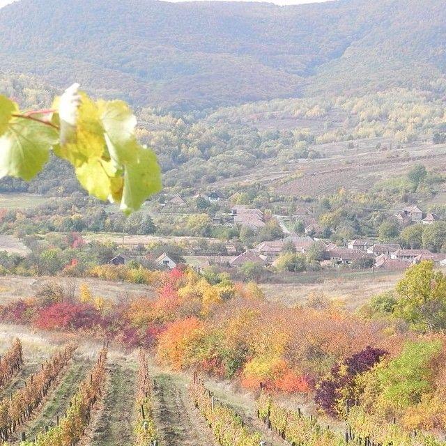 #visittokaj #tokaji #vineyard #Harvest #autumn #tokajwineregion #loves_hungary