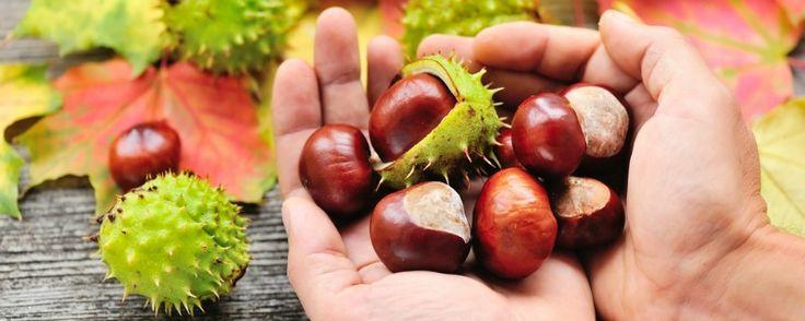 Resistent zetmeel; vitaliteit en vrolijkheid begint met gezonde darmen