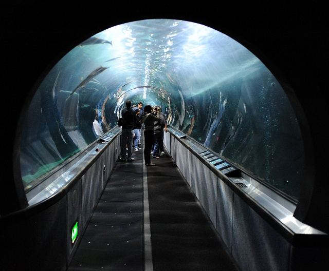 Tunnel under SF Bay......really?  I didn't know about this.