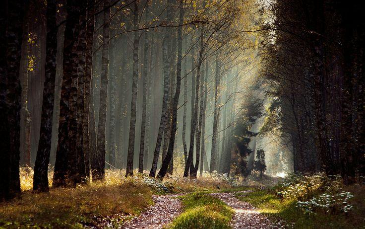 forest in bory tucholskie <33 amazing
