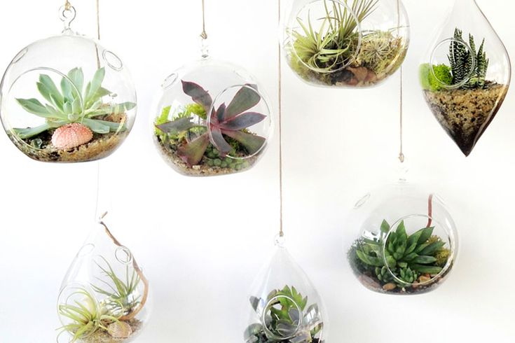 Hangend of staand. Het terrarium is er in vele vormen en maten. Allemaal passend binnen de botanische interieur trend van nu.  - More plants, terrarium and interior inspiration on http://www.stylingblog.nl
