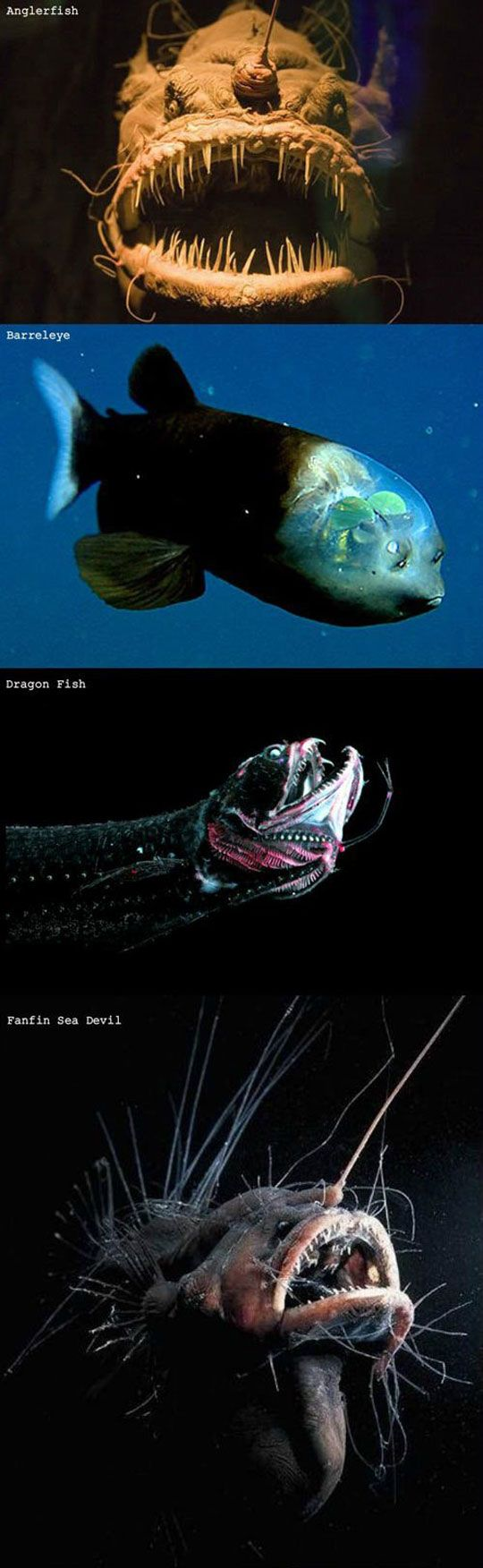 The Ocean Is Scary Deep water fish