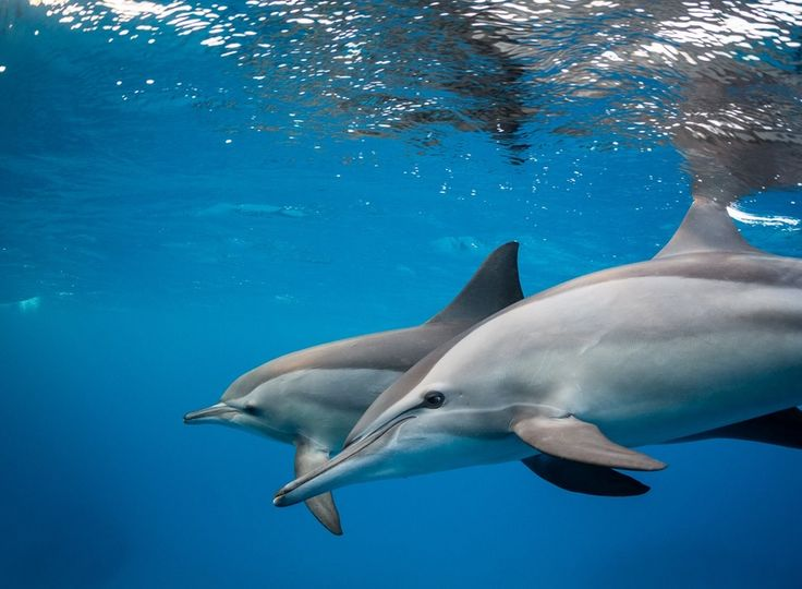 Dolphin House http://www.ibisegypttours.com/excursions/marsa-alam-excursions