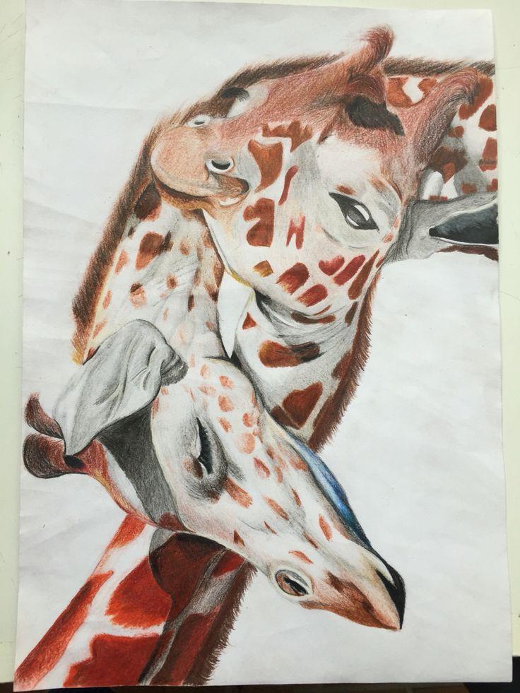 The Hug of Giraffe