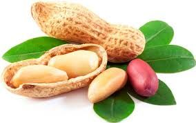Khasiat Kacang Tanah Untuk Menambah Berat Badan  Kacang Tanah berkhasiat untuk menambah berat badan tetapi juga memiliki efek samping. Untuk itu diperlukan suplemen penambah Berat Badan Spirulina Plus  http://www.pagarsehat.web.id/khasiat-kacang-tanah-untuk-menambah-berat-badan/