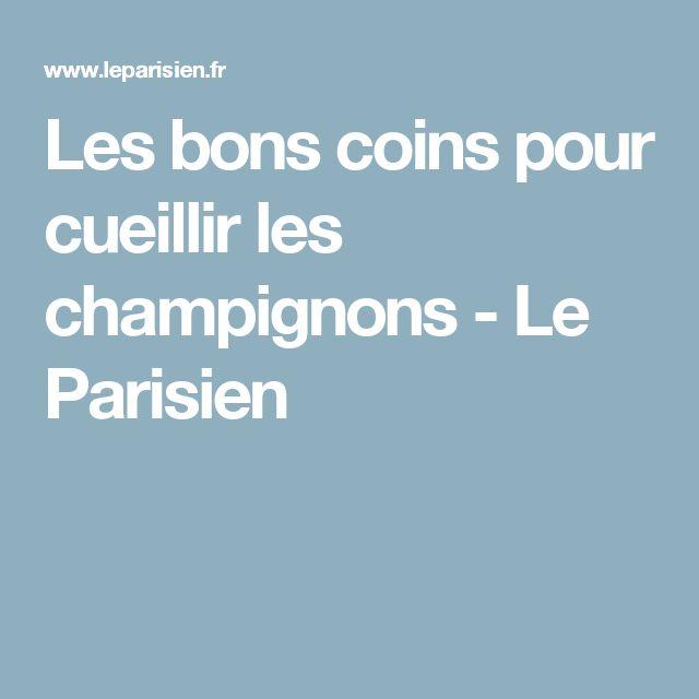 Les bons coins pour cueillir les champignons - Le Parisien