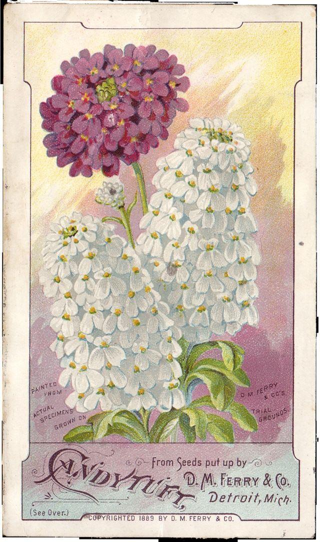 Vintage Flower Цветы, Открытки, Сирень