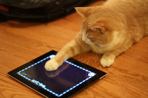 10 iPad Apps Just For Cats..Mama Mia loves an app we have on our Xoom.