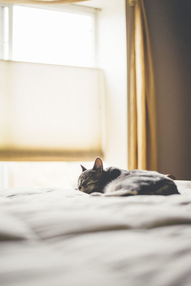 """Ah, to have a cat napping on my bed again, what a joyous thought. * * DON'T THINKS ABOUT IT - ADOPT A NEW KITTEH."""""""