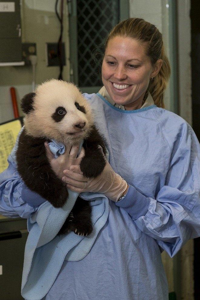 Panda del Zoológico de San Diego cumple 100 días y es bautiza... - VeoVerde