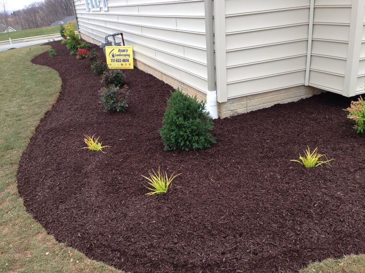 1000 images about new home landscaping ideas by ryan 39 s for Low maintenance lawn plants