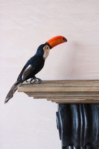 Toucan - the faux bird £14