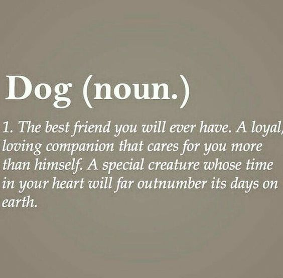 734 Best Images About Dog Quotes And Poems On Pinterest