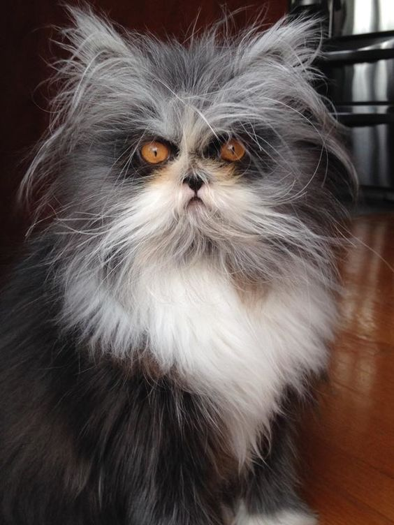 i-style Isn't this cat something.  I know of some people who have hair like this!!