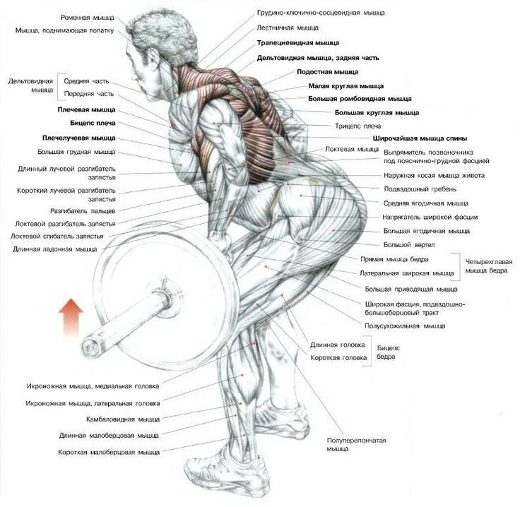 картинки как накачать мышцы спины данном