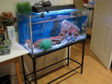 gumtree canberra fish tank sale http://www.gumtree.com.au/s-ad/charnwood/pet-products/fish-tank-3ft-includes-everything-stand-fish-tones-more/1007288166