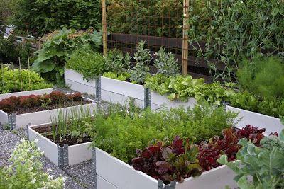 Wenches hage: Slik ble grønnsakshagen til