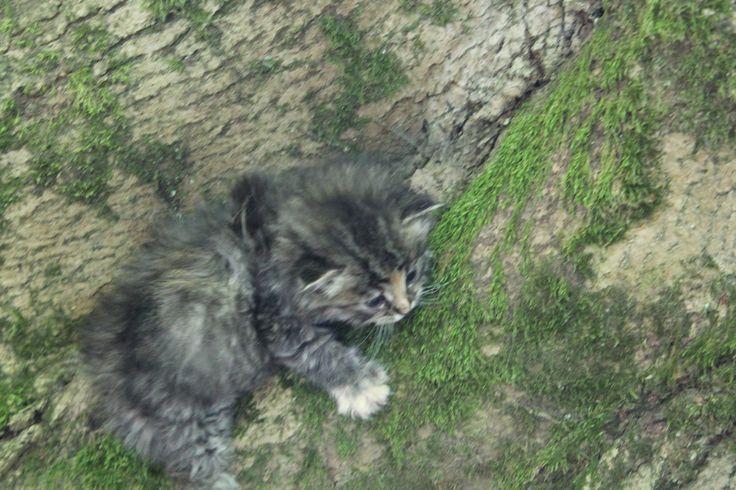 Nature na stromě!