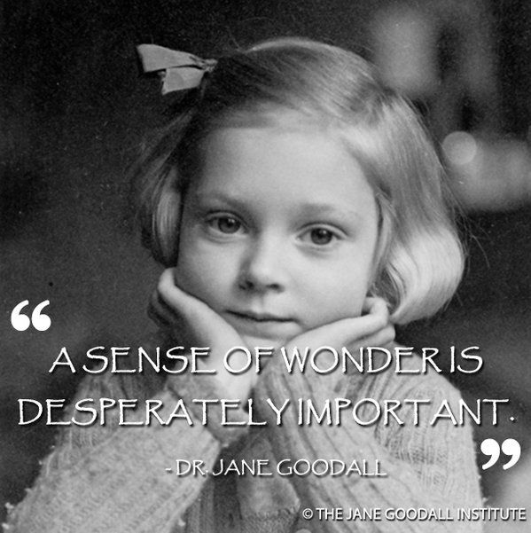 a sense of wonder jane goodall - Google Search