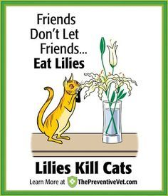 ♥ Cat Care Tips ♥  Lilies Kill Cats