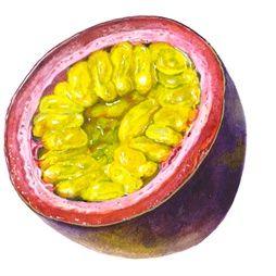 Fruit illustratie door Rosie Sanders