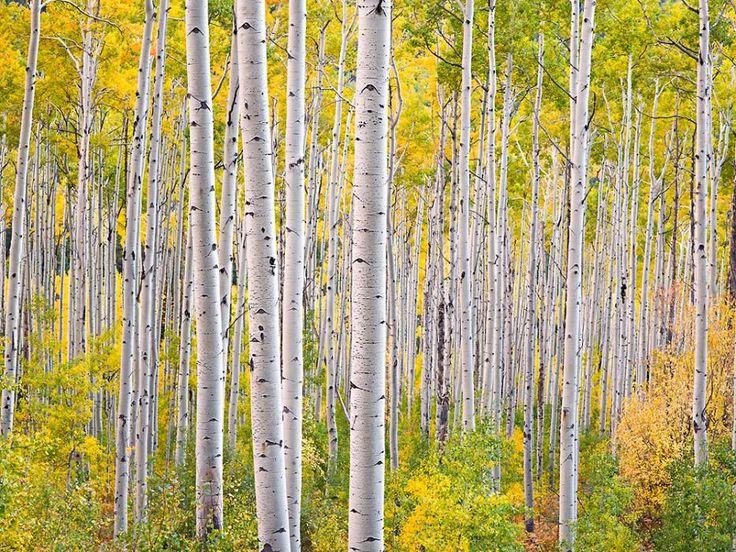 Steven Friedman Glowing Forests