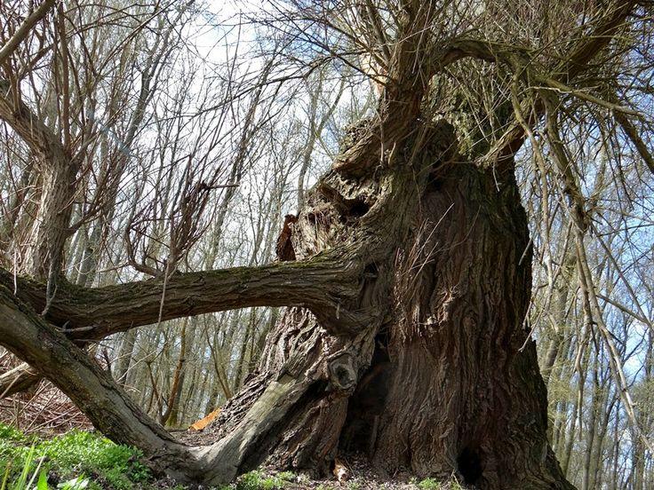 Fák,erdők,parkok.Elbi blogja: Bagatellek a Gemencből