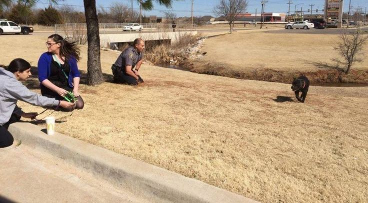 Officer Bryan Taylor stopped traffic in two directions, to rescue and soothe a lost, pregnant dog. Read more