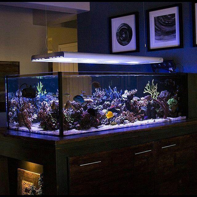 54 best images about morski akvarijum reef tanks on for Marine fish store