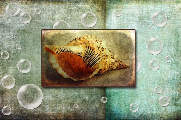 ARTFINDER: Seashell Dream by Randi Grace Nilsberg - A seashell can hold many dreams and memories from far away places.  Listen to the sound of the waves........   Photo with textures.  Hahnemühle Fine Art Pr...